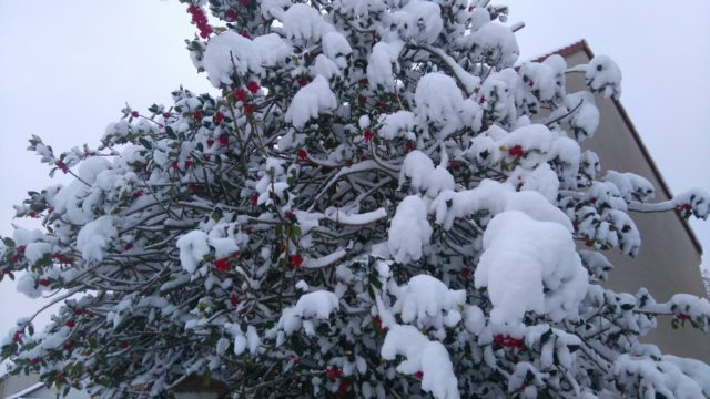 雪と赤い木の実
